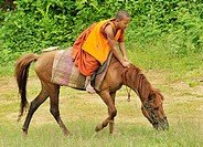 Novice and the horse on relaxation time, Wat Tam Pa Ar-Cha Thong, Maechan, Chiangrai, North of Thailand.
