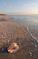 SHELL ON CASPERSEN PARK BEACH, GULF OF MEXICO, VENICE, FLORIDA