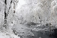 Overgrown canal in winter