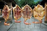 Drying Ducks, Yangdi, Li River, Guangxi, China.