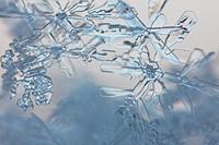 Close up of snowflakes at dusk