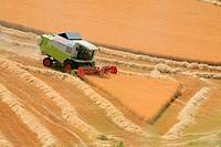 Barley Harvesting, Castilla, Spain