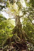 Dense jungle in the Chiriqui Highlands, northern Panama