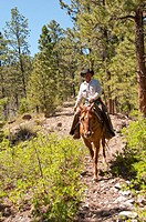 USA, Utah, horseback ride in Escalante with wranglers Jamie Barnson and Cash Barnson through ponderosa pine forest up steep trail to Aquarius Plateau ...