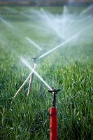 Sprinklers watering a field of cereals, Cordoba, Andalusia, Spain, Europe