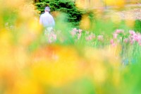 Spring flower blur in Golder´s Hill Park, Hampstead, London, England