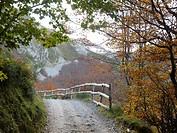 Path, Somiedo, Asturias, Spain