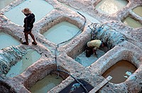 Men working in a tannery in the medina of Fez  Fez el Bali, Imperial city, Morocco