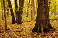 Russell Woods Forest Preserve in autumn. Genoa, Illinois.