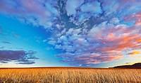 Ploughed field landscape. Northwest of Guadalajara province. Castille La Mancha. Spain.