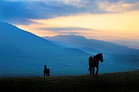 A couple of horses on Croaghaun Hill.