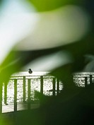 Seagull resting on a footbridge seen through green foliage. Sant Carles de la Rapita Village. Ebro Delta Natural Park. Montsia Region, Tarragona Provi...