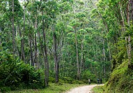 Villagers walking on a path in the Andasibe forest area in Eastern Madagascar.