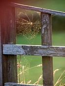 cobweb in a garden UK.