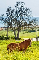 Horse. Tarifa, Cadiz, Andalusia, Spain, Europe.