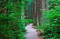 A walking trail through a dense temperate rain forest in Vancouver, Canada.