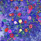 A colourful background of flowers.