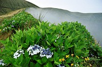 Fog in the caldeira of Faial island, Azores, Portugal.