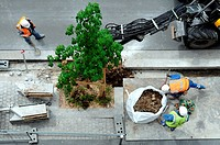 Planting trees, construction of the T8 tramway line from Saint-Denis to Epinay and Villetaneuse. Its entry into service is planned for 2014. Saint-Den...