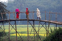 Women are passing wooden bridge in a village in Bangladesh.