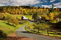 Bright Fall leaves around Sleepy Hollow Farm on Cloudland Road Woodstock Vermont.