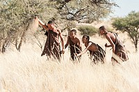 Four Bushmen hunting in tall silky grass in Kalahari watch sand falling to determine the wind direction, southern Namibia, Africa.