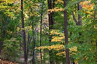 Woodland in autumn at the Frelinghuysen Arboretum, Morristown, New Jersey, NJ, USA.