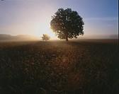 Sunrise in the field. Poland.