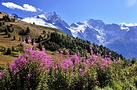 Red flowers and beautiful mountain scenery of the Alps, Hautes-Alpes, French Alps, France.