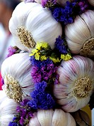 Wreath of pink garlic of Lautrec, France