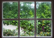 View of garden through window