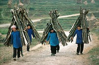 China, Guizhou, Yongkan village, Shui women carrying firewood.