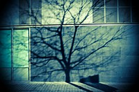 Silhouette of a tree on a wall in a street. Barcelona, Catalonia Spain.