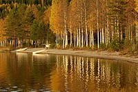 Rowing boat at the shore of a lake in autumn.