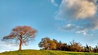 Oak tree, Sariego municipality, Asturias, Spain