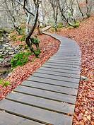 Faedo (Beech forest) de Ciñera, Ciñera de Gordon, León, Spain