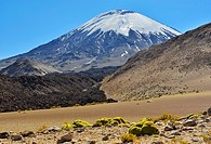 Parinacota volcano. Lauca National Park. Norte Grande region. Chile