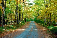A country road in Prince Edward island, Canada in autumn.