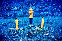 Fire hydrant in the Gary Paxton Industrial Park near Sitka, Alaska, USA.