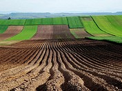 Field in Lesser Poland near Slomniki.
