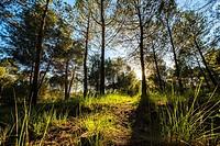 Volpelleres forest at Sant Cugat del Valles Barcelona Spain.