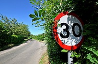 Almost obscured 30mph speed limit sign on a country road. Kent, England, UK.