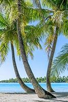 Sea view through palm trees on Moorea island, French Polynesia.