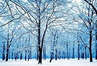 winter trees silhouetted in snow, kent, england uk.