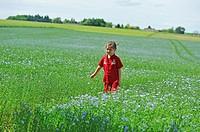 little girl dressed in red in a flax field flowering, Centre-Val de Loire region, France, Europe.