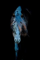 Friesian horse in the dark.