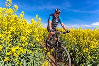 A man on a mountain bike rides in a field of flowering rape, Czech Republic.