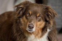 A dog gazes knowingly at her owner.