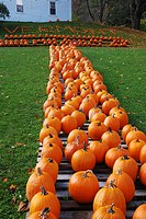 The pumpkins spell out ´Vermont, ´ at a roadside farm stand in Pownal, VT