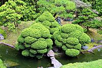 Looking down on a landscaped Japanese garden with a pond, bamboo, evergreens and sculpted shrubs in California, USA.
